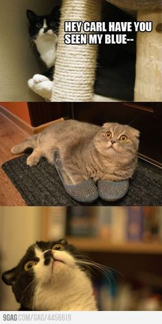 Funny pictures about Hey Carl have you seen my. Oh, and cool pics about Hey Carl have you seen my. Also, Hey Carl have you seen my. Memes Humor, Funny Animal Memes, Cute Funny Animals, Funny Animal Pictures, Funny Cute, Funny Images, Cute Cats, Silly Cats, Funny Humor