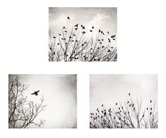 Black and White Bird Photography Set - A set of three bird in tree photographs in neutral black and white tones. Shop my full collection of
