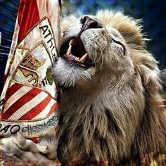 Athletic Club Bilbao #leones #rojiblanco