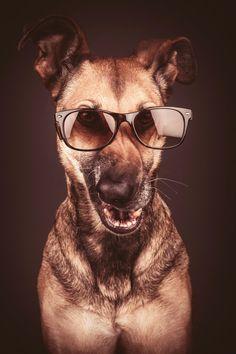 Cool dog by Elke Vogelsang, via 500px.