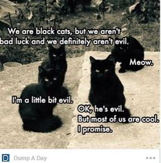 Funny Cat Memes Of The Day – 35 Pics – Lovely Animals Worl… Memes gato gracioso del día – 35 fotos – Lovely Animals World Funny Cat Compilation, Funny Animal Memes, Funny Cat Videos, Funny Animal Pictures, Cute Funny Animals, Cute Baby Animals, Funny Cute, Cute Cats, Funny Pics