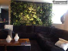 Das geht steil: Die Living Wall fürs Wohnzimmer. Bring Dich in die Vertikale mit dem Minigarden!  #CropLocal