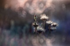 Photograph . by Silena  Lambertini on 500px