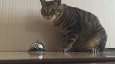Service Bell for kitty   (Click to view video)
