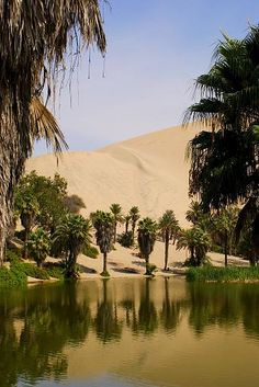 beautiful, photography and nature image on We Heart It Desert Oasis, Desert Life, Deserts Of The World, Fantasy Places, Natural Wonders, Strand, Wilderness, Nature Photography, Beautiful Places