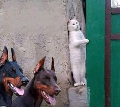 Com - humour animaux - funny hilarious cute animals Animal Jokes, Funny Animal Memes, Dog Memes, Funny Animal Videos, Cute Funny Animals, Funny Animal Pictures, Cute Baby Animals, Funny Dogs, Cute Cats