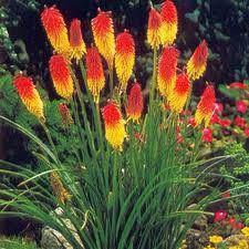 53 Best Plants Zone 6 Images Plant Zones Garden Plants Gardening