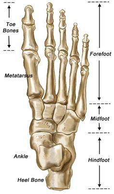 skeleton feet | foot bones top view your foot is quite easy to find just look down
