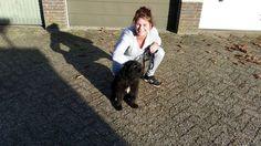 Maxie new foundlander pup
