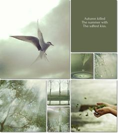 by Audrey T Beautiful Collage, Beautiful Words, Beautiful Pictures, Word Collage, Beauty In Art, Anne Of Green Gables, Cottage Homes, Mood Boards, Color Inspiration