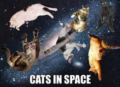 Cats in Space - this one is for you Leslie!