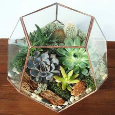 how to paint a cactus flower Terrarium Containers, Terrarium Plants, Succulents In Containers, Succulent Terrarium, Planting Succulents, Glass Terrarium, Cactus Flower, Flower Pots, Potted Flowers
