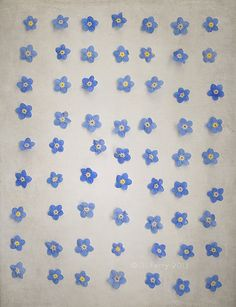 Forget-me-not blues…