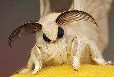 Bombyx and your silk cocoon
