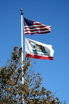 A durable power of attorney in Arizona is defined as a power of attorney that remains in effect after the person who signed it is unable to make decisions for herself. The person who creates a power of attorney is called the principal. Beagle, California Flag, Power Of Attorney, Best Places To Live, The Good Place, Symbols, America, Children, 50 States