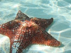 Sea star - no longer called Starfish because they have no gills. Same with Jellies - they are no longer called Jellyfish.