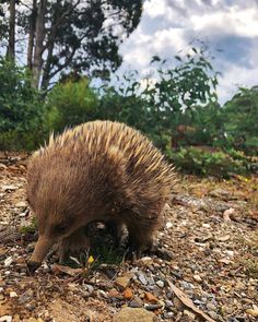 Tasmania, North West, Wildlife, Saturday Morning, Walking, Instagram, Hiking
