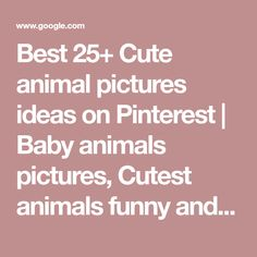 Best 25+ Cute animal pictures ideas on Pinterest | Baby animals pictures, Cutest animals funny and Lol pics