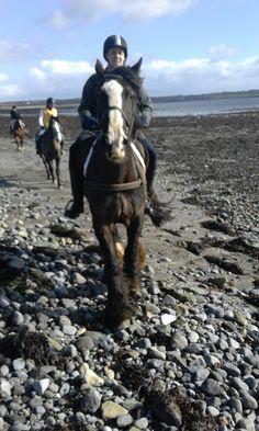 Small Island, Trekking, Horses, Adventure, Website, Beach, Seaside, Horse, Hiking
