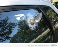 If I saw this car, I would chase them down just so I could tell them how much I love the snitch!!!!
