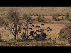 Curando la tierra. Manejo Holístico. Taranaki Farm - YouTube.  Se puede ver con subtítulos en español.