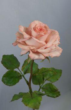 Цветы Из Помадки, Цветы Из Глины, Большие Цветы, Сахарные Цветы, Экзотические Цветы, Красивые Розы, Художественные Советы, Художественная Роспись, Смешивание Цветов Краски