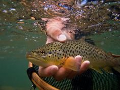 Trout Fishing Tips and Hints for Beginners