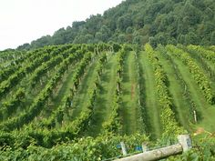 Abingdon (VA) Vineyard and Winery