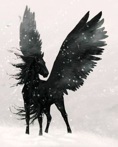 Cavalo voador negro