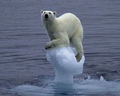 Point taken, Mr. Gore. #GlobalWarming  #JustSad   (links to humor site, but this image is not funny)