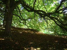 Under the glorious trees in Edinburgh Botantic Garden summer 2014