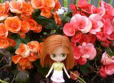 https://flic.kr/p/vY6ZoV   Libby Moonbeam wandering through the begonias... 163/365