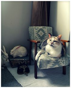 This is Missy sitting on my son's tiny arm chair I've just reupholstered.- Catherine (New Zealand )