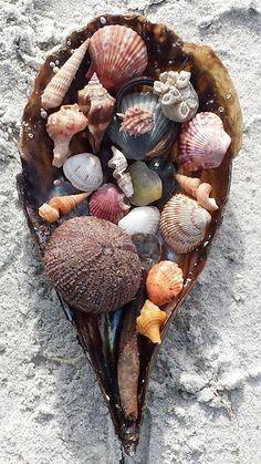 ...shells...
