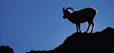 New Moon In Aries: 6 Ways To Maximize The Mojo Of The Ram