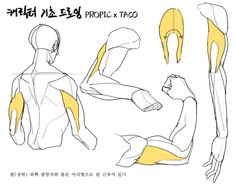 how to draw sketches Arm Anatomy, Anatomy Poses, Anatomy Art, Anatomy Drawing, Drawing Skills, Drawing Poses, Drawing Techniques, Drawing Tips, Figure Drawing Reference