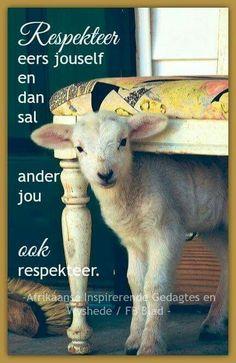 thefullerview: baa, little peek-a-boo lamb (via Pin by t h e f u l l e r v i e w on f u r r y - f r i e n d s Cute Baby Animals, Farm Animals, Animals And Pets, Beautiful Creatures, Animals Beautiful, Sheep And Lamb, Baby Sheep, Baby Goats, Pet Birds