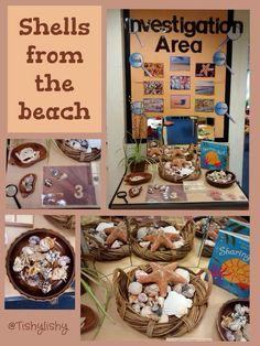 Updated Investigation Area - shells from the beach, My Favorite, Science Area, Preschool Science, Science Activities, Shape Activities, Writing Activities, Life Science, Science Nature, Reggio Classroom, Preschool Classroom