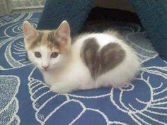 「うちの猫は1歳と少し。今日初めてハートマークがあることに気がついた…」こんなところに!という写真:らばQ