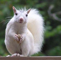 I love nature - White Squirrel.