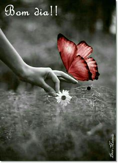 Obrigada, fiquei feliz por isso... 😉 Beijos enormes 😘 Good Afternoon, Good Morning, Splash Photography, Special Words, Night Quotes, Color Splash, Black And White, Pictures, Butterflies