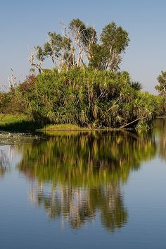 Yellow Water Billabong. Kakadu National Park, Australia