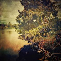 Still Morning #landscape #pond #lake #walterfullerpark #stpete #florida #mobilemasters #retroluxers #retroluxaholics #mobileartistry #mobiography #iphoneart #theappwhisperer #fineartstorage_ampt #the_mobile_arts #art_feeling #artistry_flair #art #ig_artgallery #igcurator #youmobile #mobilephotos by michael_coyne