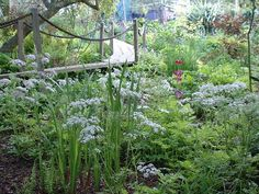The Wetlands Garden - Natural Landscaping, Gardening, and Landscape Design in the Catskills and Hudson Valley including Ulster County, Ellenville, New Paltz, Kingston, and Woodstock