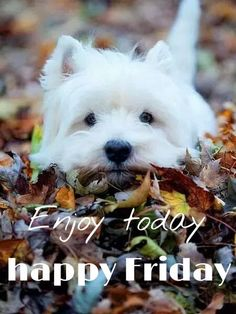Check out this picture of a gorgeous Westie laying on fall leaves. West Highland White Terrier puppies have the sweetest eyes and the most gentle expressions. Baby Dogs, Pet Dogs, Dog Cat, Doggies, Pet Pet, Chihuahua Dogs, Maltese Puppies, Cute Baby Animals, Funny Animals