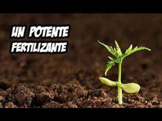 Potente Fertilizante Organico   Experimento con Lodos