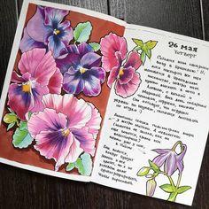 439 отметок «Нравится», 23 комментариев — Настя Лемура (@cattalema) в Instagram: «#visualjournal #visualdiary #sketchbook #copicmarkers #touchtwin #finecolour #aquilegia #violets»