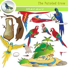 This 26 piece clip art set features four species of Macaws. Included is a nest in a hollow tree trunk (cut away view), on top of which can be layered an egg, hatchling, or Green-winged Macaw fledgling to create a bird life cycle resource. The clay lick illustration can be used to demonstrate how western Amazon Macaws gather at river side cliffs to ingest clay as a way of consuming sodium which is missing from their diet of fruit and nuts.