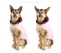 zuma minneapolis commercial pet photography :: dog coats
