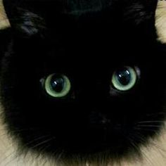 Eyes Angry Cat, Cute Animals, Kitty, Eyes, Friends, Pretty Animals, Little Kitty, Amigos, Cutest Animals
